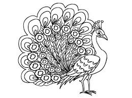 Small Picture Peacock coloring pages tail expand ColoringStar