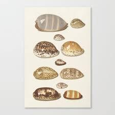 Seashell Chart Vintage Seashell Chart Ii Canvas Print By Fineearthprints