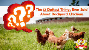 The 12 Daftest Things Ever Said About Backyard ChickensBackyard Chicken Blog