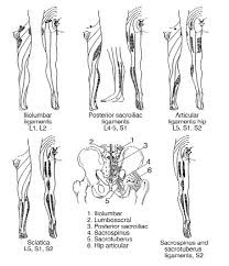 Pain Referral Patterns Awesome Referred Pain VsOrigin Of Pain Pathology Page 48