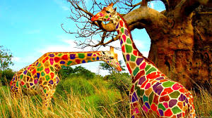 african animals wallpaper high resolution. Plain Animals Get Colored Giraffe Wallpaper Wide Or HD From Animals Wallpapers Set  High Resolution Image As Your Desktop Background Inside African High Resolution T