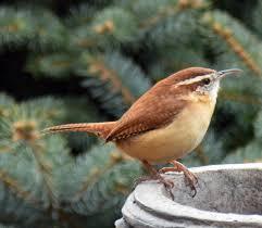 Explore The Great Outdoors  Greene County Public LibraryBackyard Bird Watch
