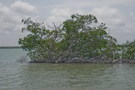 Estero Bay Preserve State Park Naples