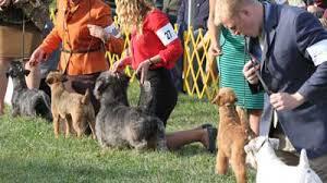 Terrier Group American Kennel Club