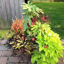 Small Picture Flower Garden Ideas Full Sun The Garden Inspirations