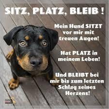 Lustige Hundebilder Photos Facebook