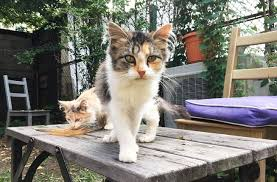 stray feral calico kittens