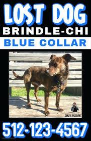 Missing Dog Poster Maker Pet Template Uk Free Lost Apvat Info