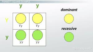 Mendelian Genetics Chart Mendelian Genetics Guide For Beginners 3 Fundamental Principals