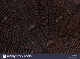 dark wood texture. Burnt Wood Texture. Dark Wooden Background. Close Up Texture E
