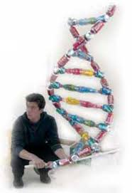 phase 3 copying a dna molecule