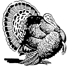 wild turkey coloring pages. Plain Pages On Wild Turkey Coloring Pages