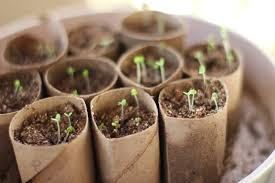 Image result for starting seeds