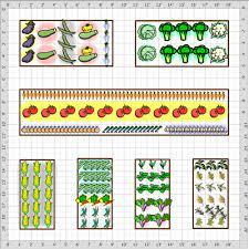vegetable garden layout basics veggie