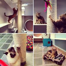 aristide hotel for urban cats brings catification to paris urban cat tree a10