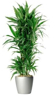 tall office plants. Simple Plants Live Plants With Tall Office B