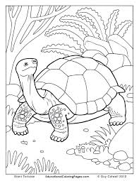 Small Picture tortoise coloring pages tortoise colouring Turtle Pinterest