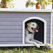 the best outdoor dog houses on according to hypehusiastic reviewers