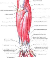 Muscle Chart Template Muscle Chart Template Soap Notes Template For Massage Therapists 1