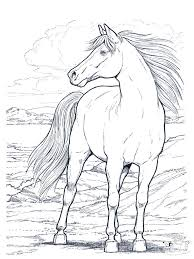 Small Picture Horse Coloring Pages For Teenagers Coloring Coloring Pages