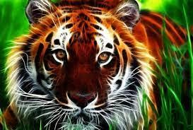 Tiger 3d Wallpaper Free Download ...