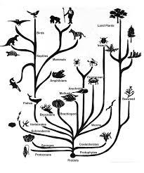 Zoology Degree Zoologistwildlifebiologist Home