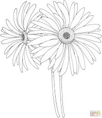 Small Picture Daisy coloring pages Free Coloring Pages