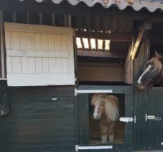 Zo Zorg Je Dat Je Paard Een Aangename Tijd Op Stal Heeft Bit Magazine