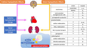 Frontiers Role Of The Sympathetic Nervous System And Its