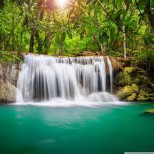 Ideas For Tropical Rainforest Iphone ...