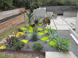 Small Picture Cactus Landscaping Ideas Lovely Cacti And Succulent Garden Best