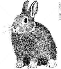 ペン画のうさぎ 1のイラスト素材 1279767 Pixta