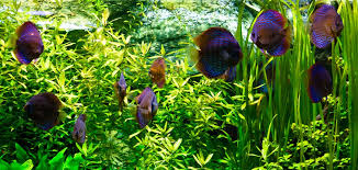 Image result for where to find expert in professional aquarium setup