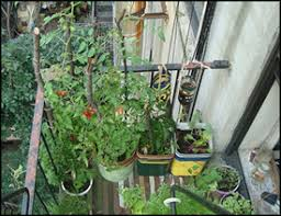 apartment gardening. Beautiful Gardening Live In An Apartment And Want To Grow Your Own Vegetable Garden In Apartment Gardening P