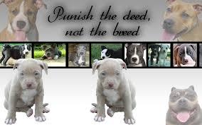 cute pitbull puppies wallpaper. Exellent Cute Pitbull Puppy Wallpaper By PiinkylOve19  In Cute Puppies P