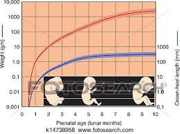 Prenatal Development Chart Fetal Development Chart Clip Art K14738958 Fotosearch