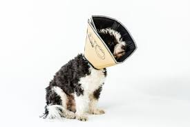 Comfy Cone Soft Cone Shaped Collar For Dogs And Cats
