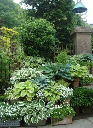 Hosta Garden Design Ideas Hostas In Containers With White Impatiens Dispersed