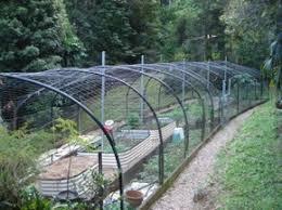 Plant Robinia Moptop Std 18m  Bunnings WarehouseFruit Tree Netting Bunnings