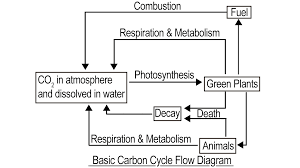 Carbon Cycle Flow Chart Carbon Cycle Diagram