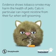 <b>Smoking Cat</b> Media October 09 18 C2 - Louth Vets