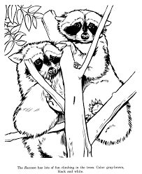 Small Picture Animal Drawings Coloring Pages Raccoon animal identification