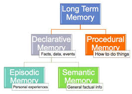 Types Of Memory Chart Long Term Memory Chart Kognineuro Memory Psychology