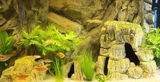 Aquarium Backgrounds Aquarium Backgrounds Real 3d For Any Aquarium Or Viv At Aquarist