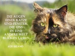 Katzen Gedichte Kurze Sprüche Zitate Und Weisheiten