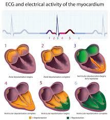 How To Read Cardiogram Chart Ekg Basics Training