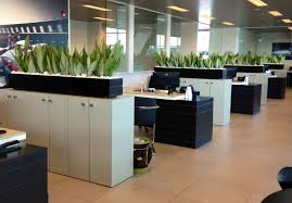office divider walls. Sanseveria \u0027Moonshine\u0027 Divider Walls Office