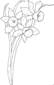 Spring Narcissus Coloring Page From Daffodil