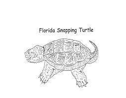 Small Picture snapping turtle coloring page Color my shell a dark greenish