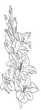 all sizes flowers 3 glads flickr photo sharing coloring books